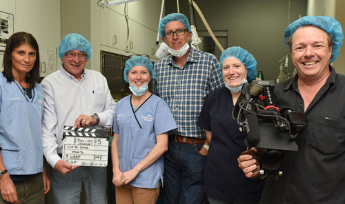 Sydney Animal Hospital Inner West surgical team, Stanmore, NSW, with Anvil Media camera crew
